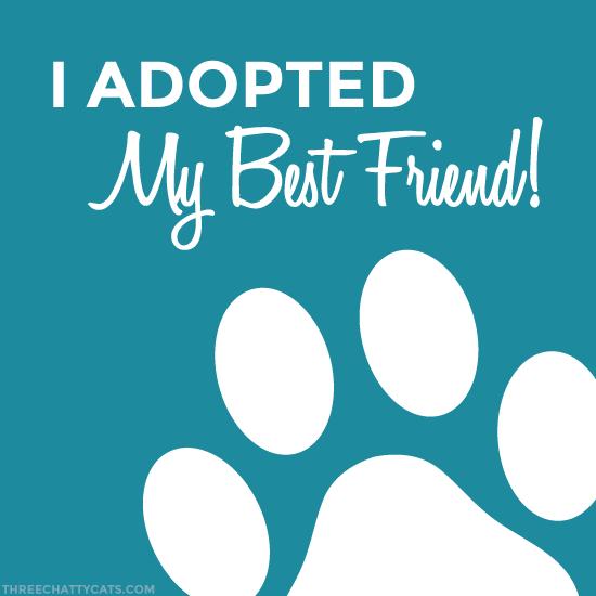 I Adopted My Best Friend!