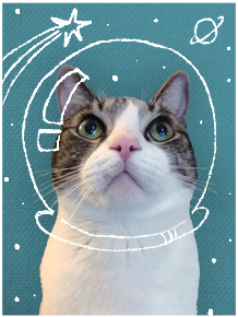 gray and white tabby cat in space helmet