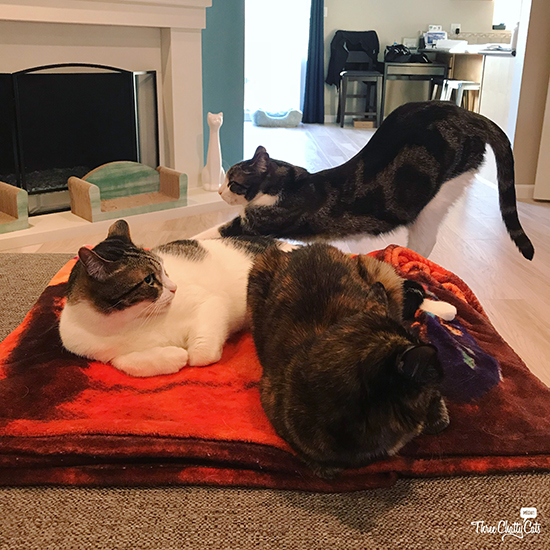 three cats hanging out
