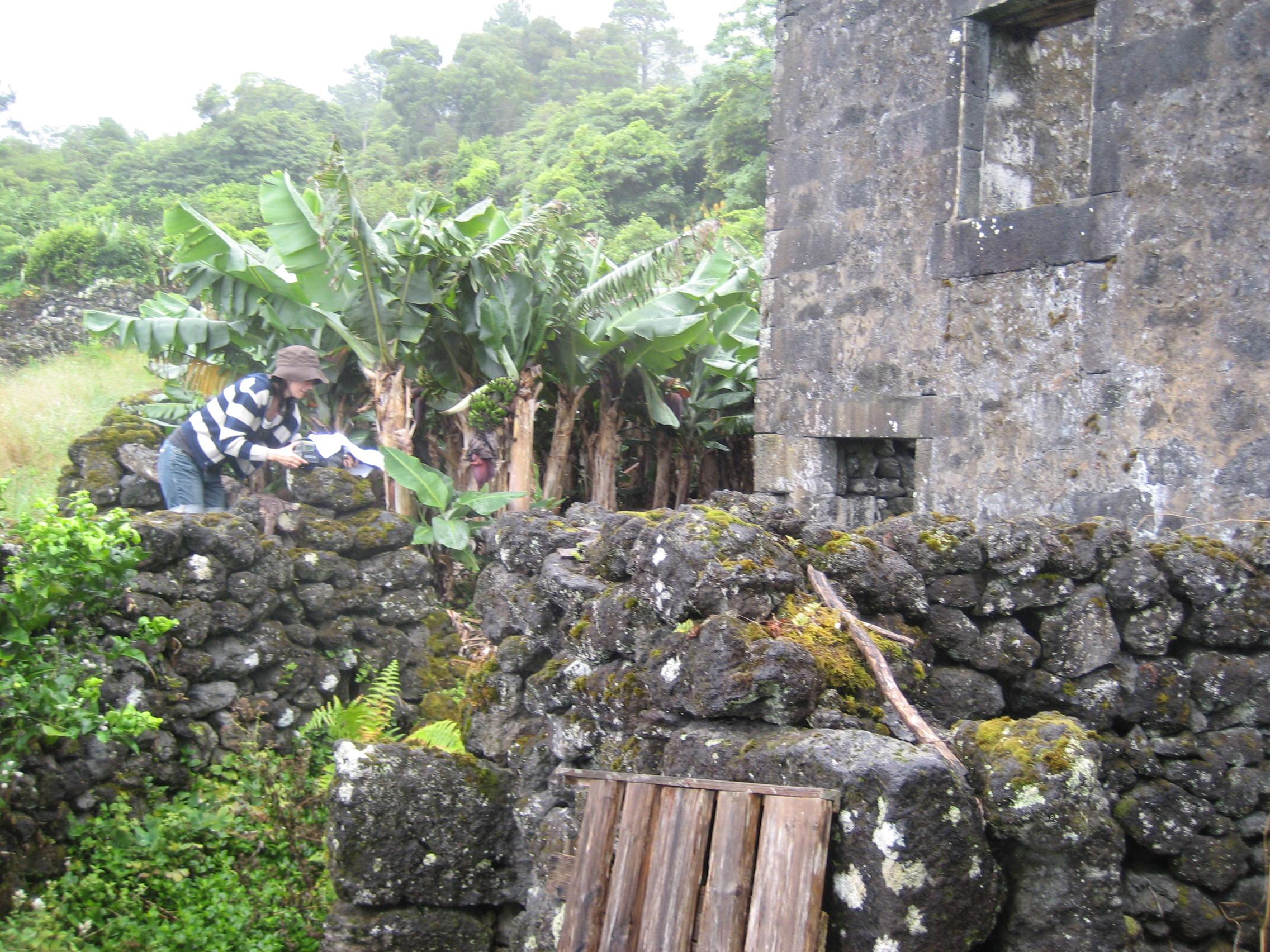 Casa d'Silva's Pico Açores (8)
