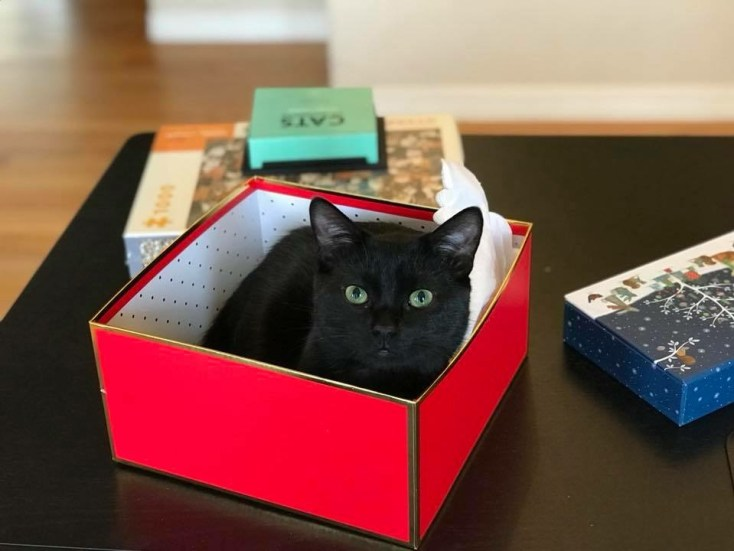 Valè, little black cat in bright red box.