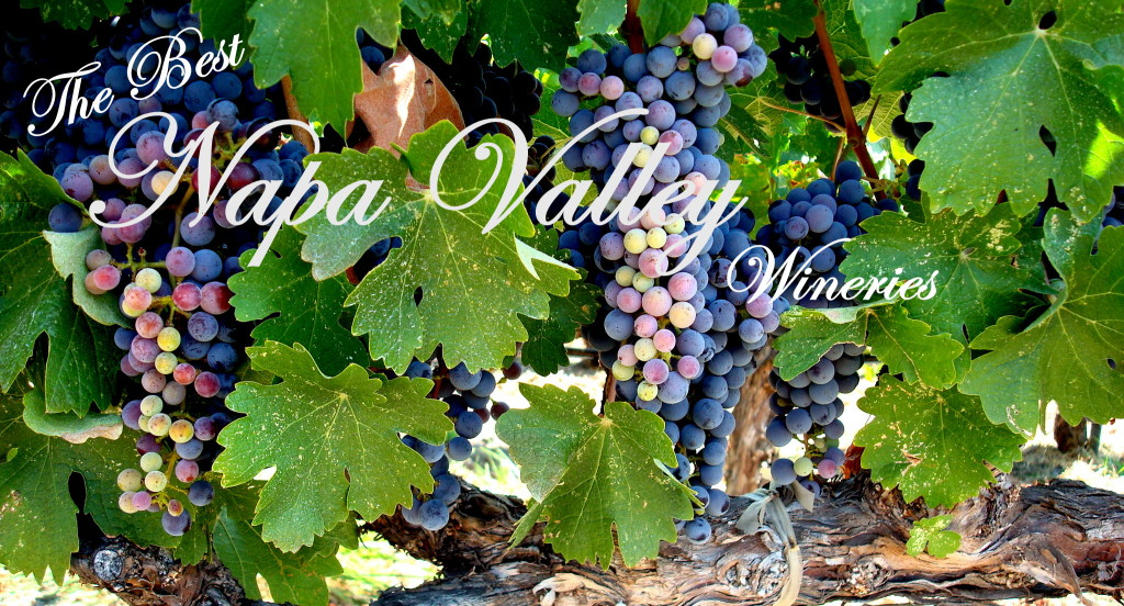 The Best Napa Valley Wineries | Three Olives Branch