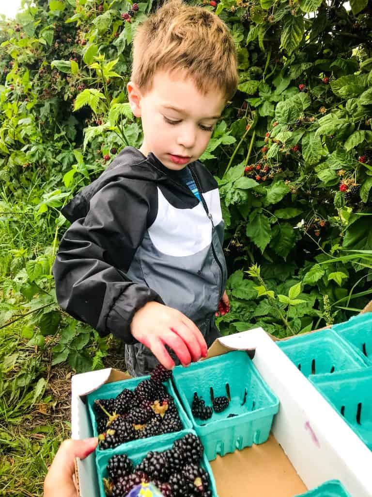 A kid picking berries from a bush
