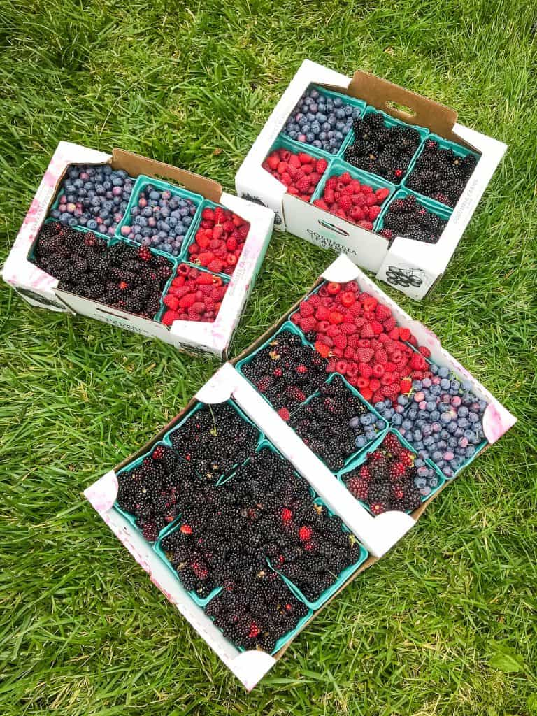 Trays full of blackberries, blueberries, and raspberries