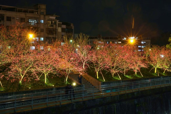 【2021內湖樂活夜櫻季】1/30~2/28 期間限定,不用到日本也能賞夜櫻!
