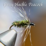 gray hackle text