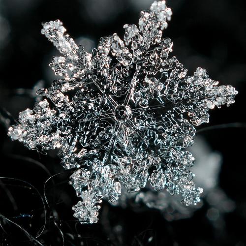 snowflake by dpnsan