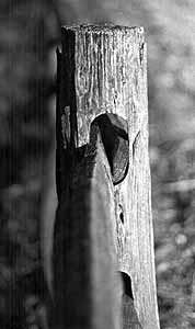 Fencepost Photo by Mike Hartley