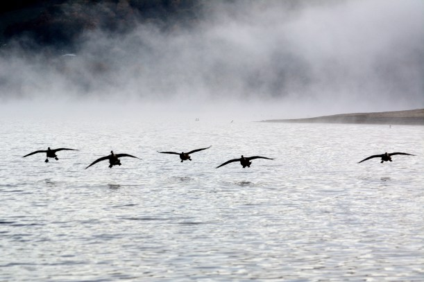 Formation in fog. Photo by Mike Hartley