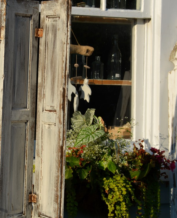 Window at the Pink Cabbage store on Route 144. Photo by Mike Hartley