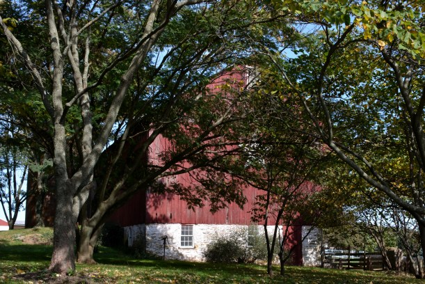 Barn through trees. Photo by Mike Hartley