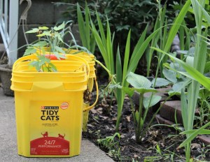yellow plastic litter container being used to grow plants