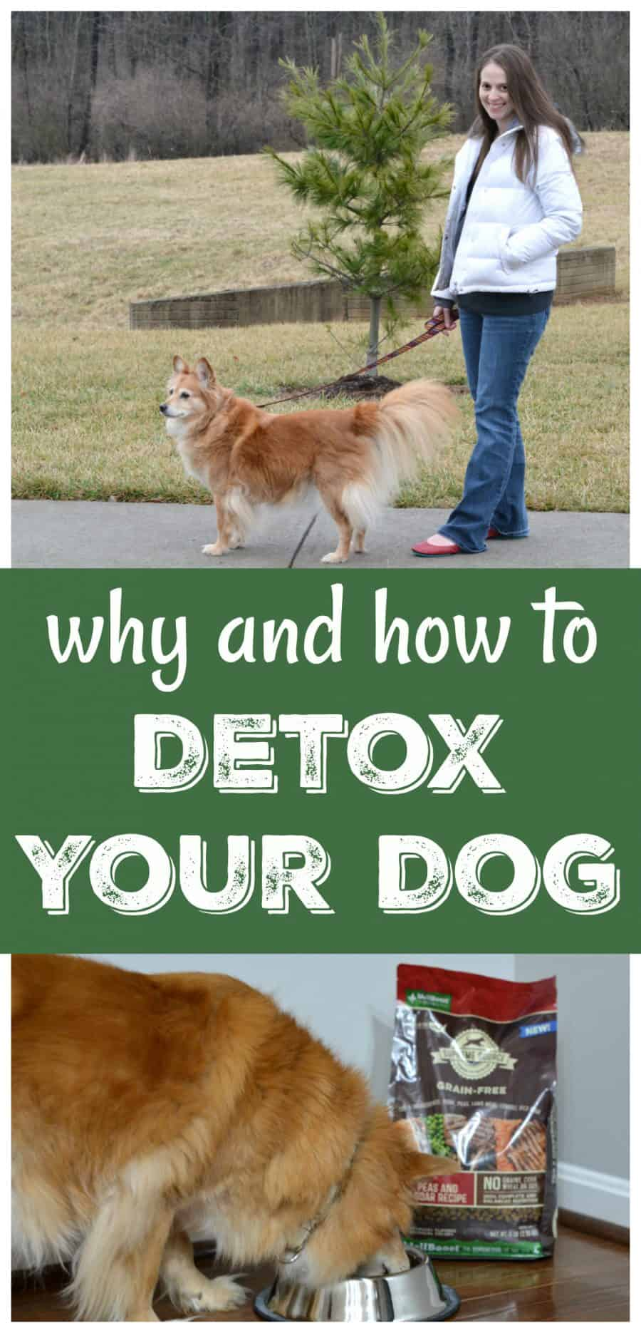 how to detox your dog