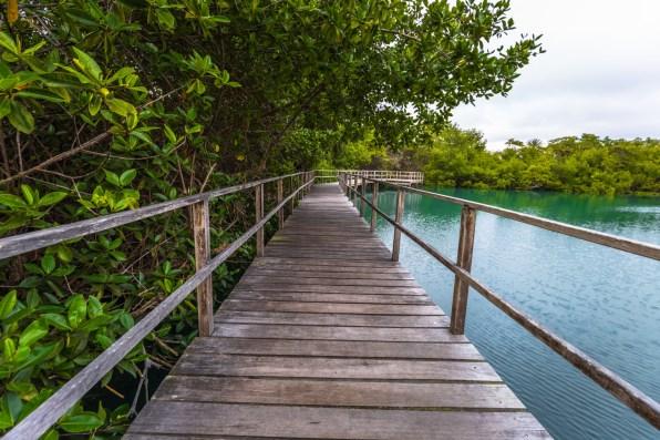 las ninfas laguna boardwalk
