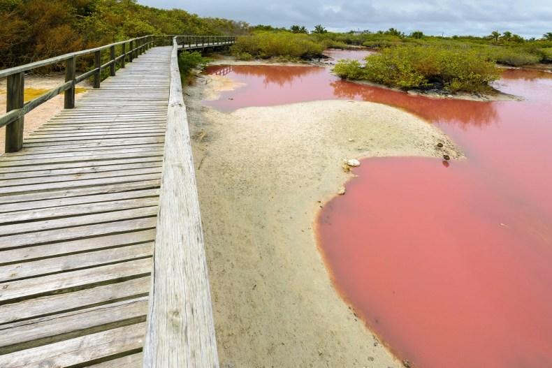 Pink Lagoon, Floreana Island