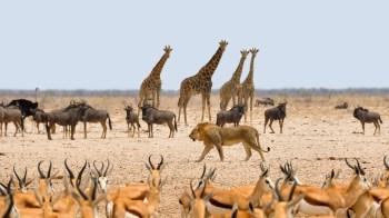 africa-1170179_1920