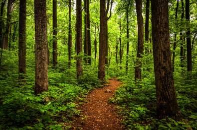 Shenandoah National Park forest