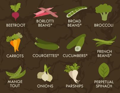 Grow your own vegetables cheat sheet infographic planting calendar