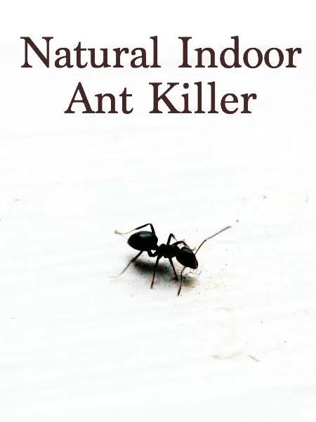Diy Ant Poison Killer