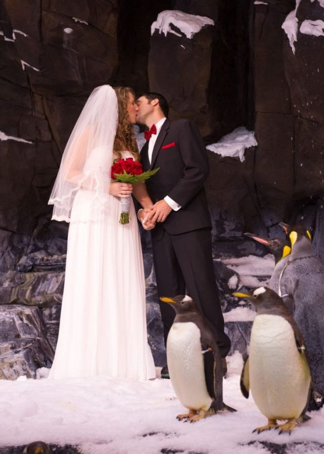 20140110_Antarctica Wedding_23