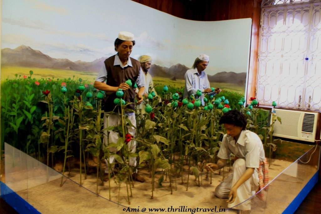 Diorama of the farming of Opium at the Indian Customs and Central Excise Museum, Goa