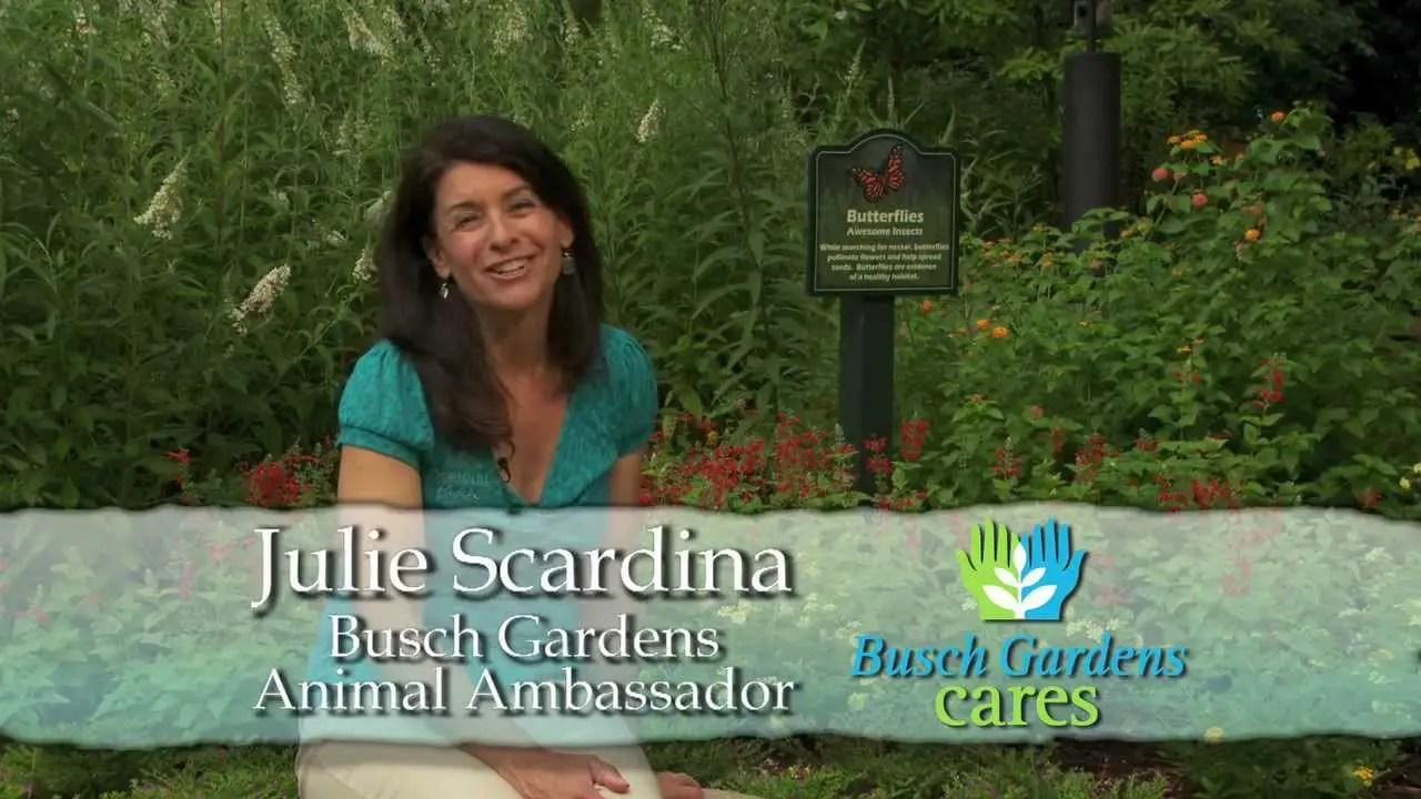 Busch Gardens Habitat Garden | Busch Gardens Williamsburg