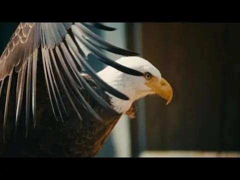 Eagle Ridge | Animal Spotlight