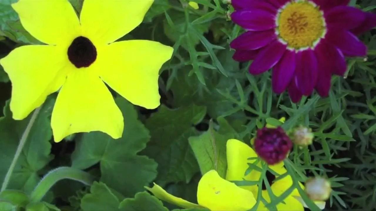 Spring Morning   Busch Gardens Williamsburg Virginia