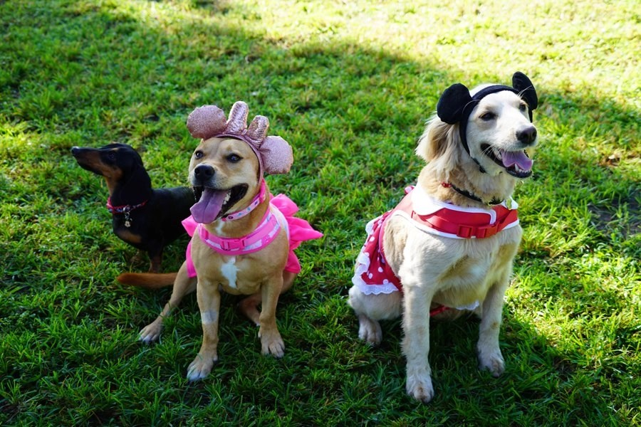 #DisneyMagicMoments: Give a Round of Ap-paws for These 'Best in Show' Disney Merchandise Of-Fur-Ings on International Dog Day