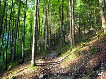 The magic wood