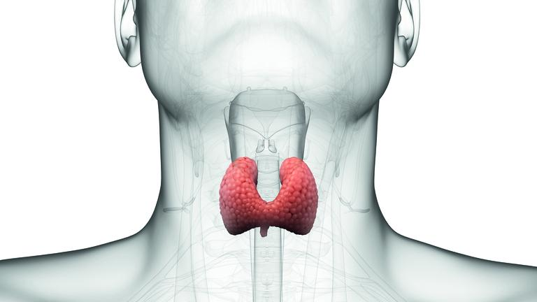 image-of-thyroid-gland_nutrition-to-support-thyroid-disease