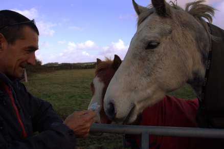 In October I found myself with time to spend with spouse. We went for walks. Here he is offering a fiver to a horse.