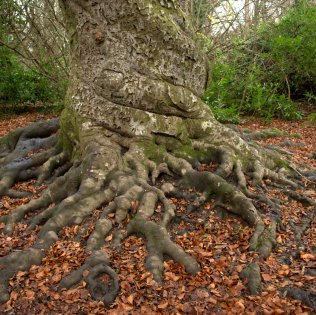 twisted roots square