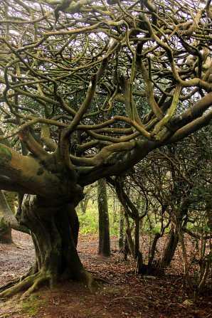 tangle trees 2 sm