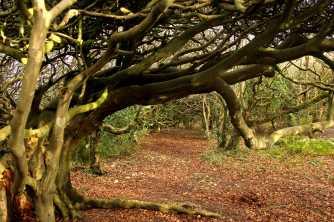 tangle trees 3 sm