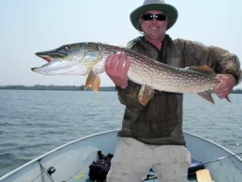 A Fisherman Poses with a Trophy Northern Pike of Over 40 Inches Caught at Silsby Lake Lodge in Manitoba, Canada. Photograph By Michael Patrick McCarty