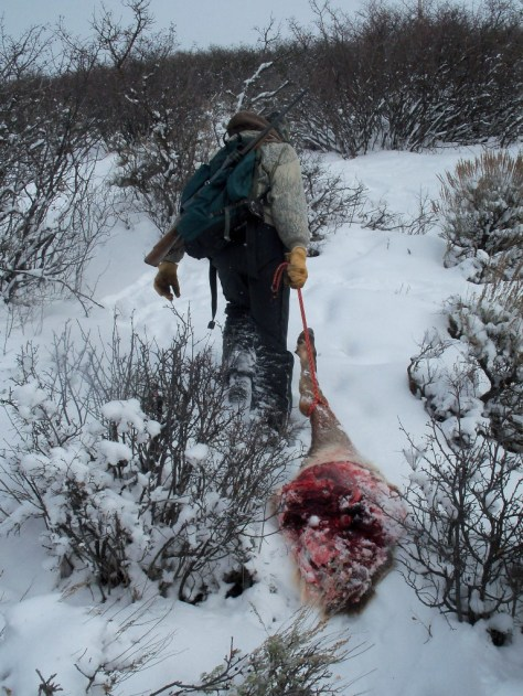 A Solo Rifle Hunter Drags an Elk Hindquarter Meat Up a Steep Hill in The Winter Snow While Elk Hunting in Colorado. Photograph by Michael Patrick McCarty