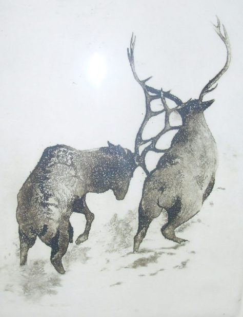 A limited edition print of two bull elk fighting with one bull goring the other artist unknown