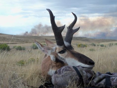 Fire. Fire Everywhere a trophy pronghorn antelope taken while bowhunting in northwestern colorado with a wildfire in the background