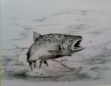 Original Pencil Drawing Art Of a Brook Trout By Charlie Manus of Marble, Colorado