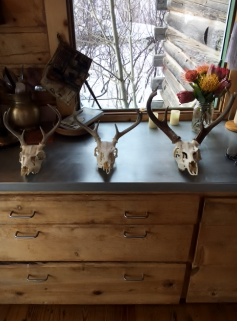 Three Coues Deer Skulls Side by Side for Comparison