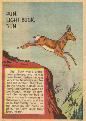 run light buck run film beebe