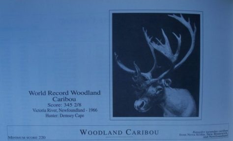A photo of the former world record woodland caribou shot by Dempsey Cape, found in the 1993 Pope and Young bowhunting Record Book