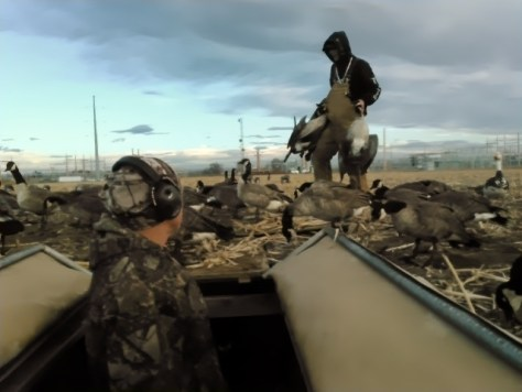 A Hunter Brings In an Armfull of Canada Geese To The Blind On A Hunting Trip Near Greeley, Colorado. Photograph By Michael Patrick McCarty