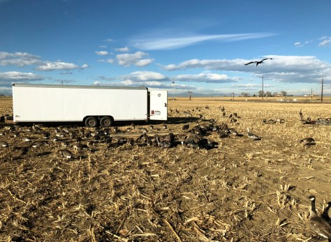 A Large Trailer Capable of Holding 400 Full BodiedTaxidermy Goose Decoys