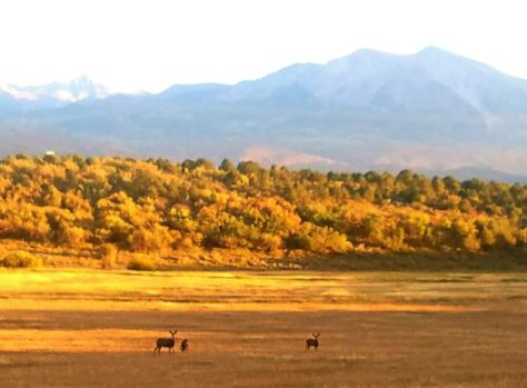 A Small Group Of Mule Deer Enjoy The Fall Colors Under Mount Sopris (Mother Mountain), Located In Pitkin County Near Carbondale, Colorado