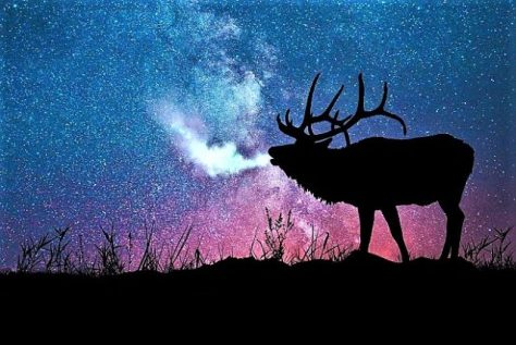 An Illustration, Or Postcard, Of A Trophy Bull Elk, Bugling, With Foggy Breath, Silhouetted Against A Starry, Late Night Sky