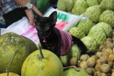 Or perhaps a kitten with your fruit?