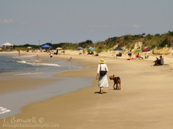 Cape May dog walk