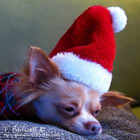 Sleepy Santa Pup